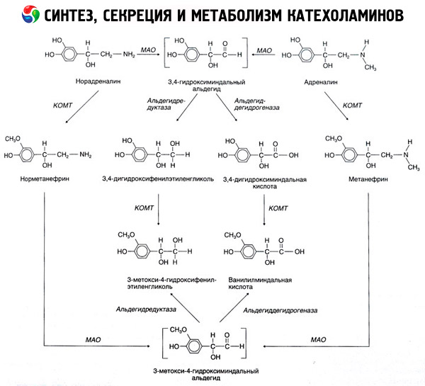 di catecolamine