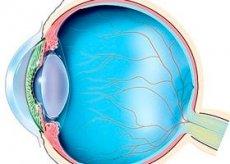 Aiuta diroton - Vene esofagee in ipertensione portale
